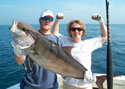 Fishing the wrecks between Miami and Hollywood produce Amberjack like this
