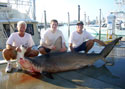 Miami Fishing Charters catch Hammerhead Sharks