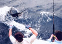 Deep Sea Fishing Charters provide thrills and excitement