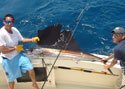 This Sailfish was revived and released