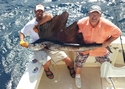 Sailfish caught aboard Old Hat on a fishing charter.